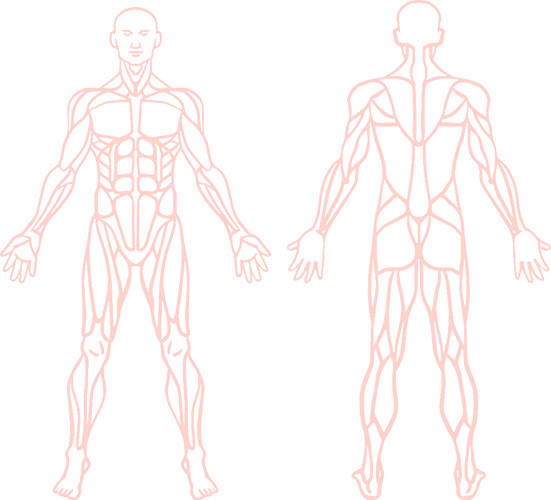 anatomy 20 Instituo Actiuni Andréia Kisner