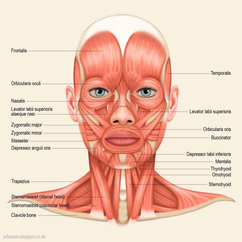 musculos pecoco face p Instituo Actiuni Andréia Kisner