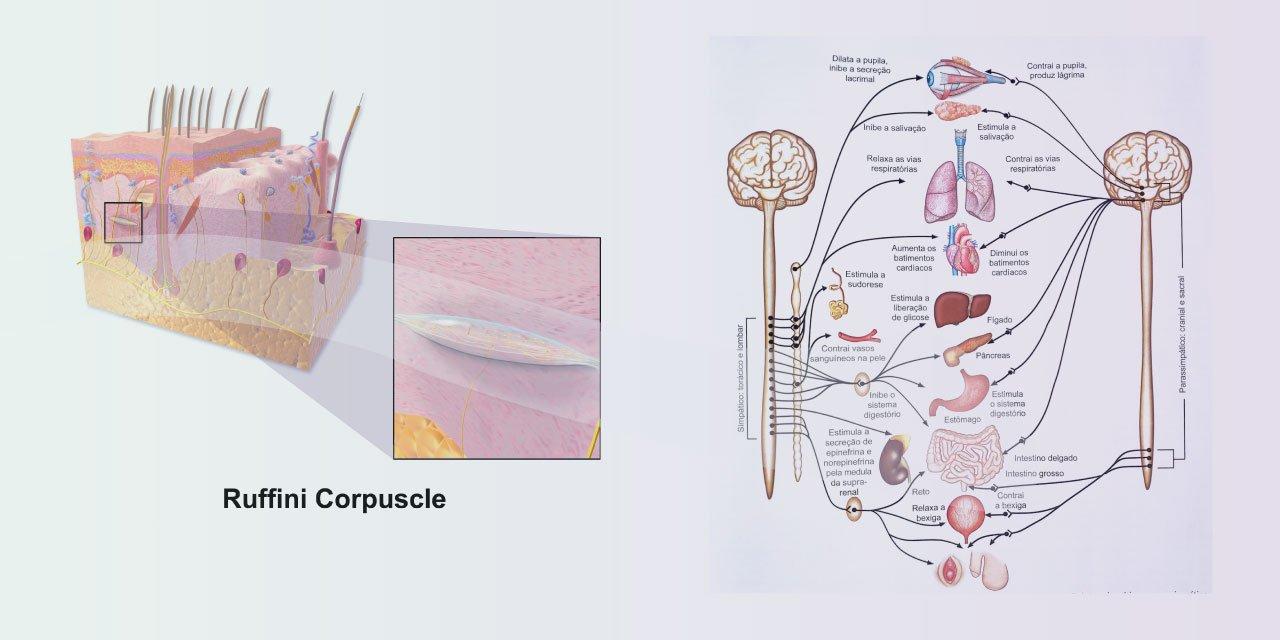 blog actiuni terapia manual tratamento fibromialgia3 Instituo Actiuni Andréia Kisner